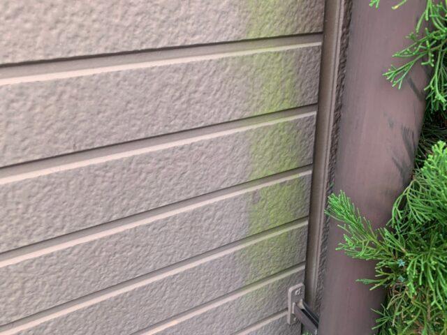 緑カビの発生の様子